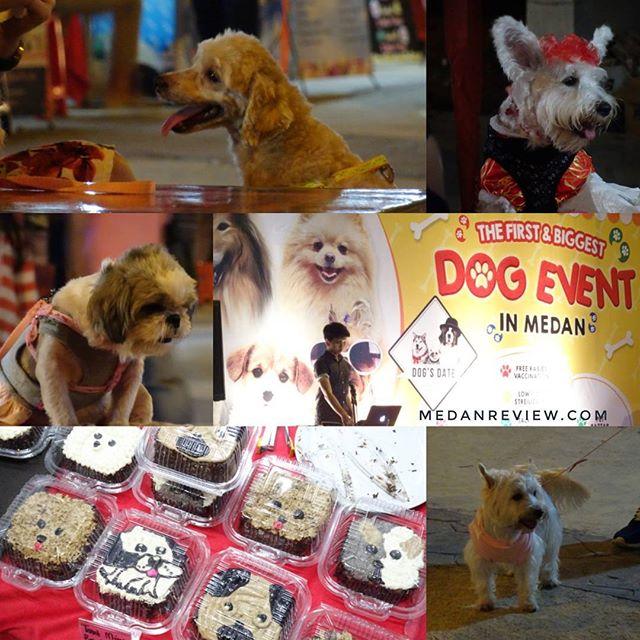 Dog's Date - Event Anjing Pertama dan Terbesar di Medan