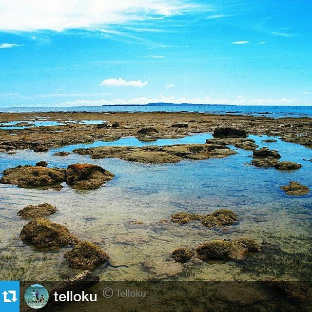 @telloku : The coral reefs... Fatolasa beach, Tello island, South Nias, North Sumatera, Indonesia